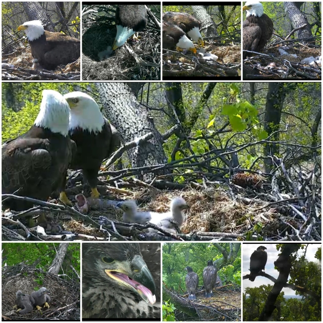 eagles collage